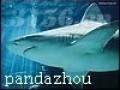 鲨鱼硫酸软骨素